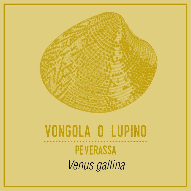 Vongola o Lupino (Peverassa) - Venus gallina