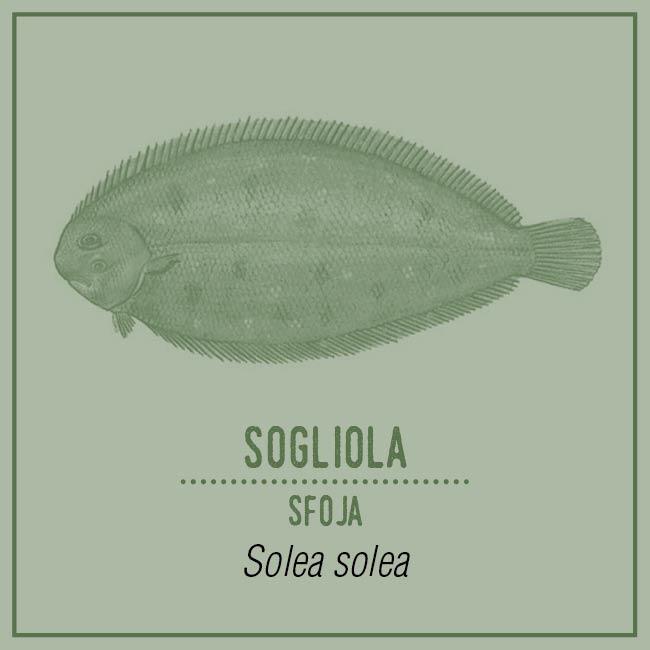 Sogliola (Sfoja) - Solea solea